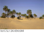 Tunisia, Sahara, Douz, oasis, palms, desert sands, North, Africa, desert, wild margin, Sand, Sand dune, dunes, palm group, date palms, vegetation, dryness, heat, dryness,, фото № 24434644, снято 18 июня 2008 г. (c) mauritius images / Фотобанк Лори