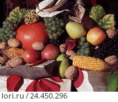 Купить «Thanksgiving Day, fruit still life, outside, fruit, vegetables, grapes, apples, pears, nuts, corncobs, pumpkin, vine leaves, harvest, autumn, Still life», фото № 24450296, снято 2 августа 2001 г. (c) mauritius images / Фотобанк Лори
