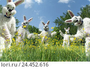 Купить «Meadow, Easter bunny, dance Easter, Easter feast, child's faith, lining, panels, costumes, hare's costumes, humor, fun, funnily, flower meadow, spring meadow, hare, dance, happy, friendly, outside», фото № 24452616, снято 21 февраля 2006 г. (c) mauritius images / Фотобанк Лори