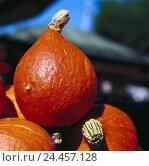 Купить «Ornamental pumpkins, batches pumpkins, fruits, Cucurbita, berries, vegetables, decoration, Deko, Still life», фото № 24457128, снято 24 января 2002 г. (c) mauritius images / Фотобанк Лори