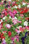 Цветущие клумбы в парке, фото № 24461620, снято 1 декабря 2016 г. (c) Алексей Кузнецов / Фотобанк Лори