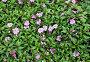 Розовые цветы и зелёные листья, фон, фото № 24461632, снято 1 декабря 2016 г. (c) Алексей Кузнецов / Фотобанк Лори