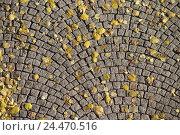 Купить «Cobblestones, detail, autumn foliage, street, sidewalk, footpath, paving-stones, stones, paved, stones, squarely, quadragular, form, sample, structure...», фото № 24470516, снято 28 декабря 2004 г. (c) mauritius images / Фотобанк Лори