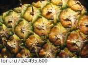 Купить «Pineapple, close-up,   South fruit, fruit, collective fruit, pineapple plant, fruit, tropical, exotically, nutrition healthy, rich in vitamins, food, pineapple...», фото № 24495600, снято 19 августа 2018 г. (c) mauritius images / Фотобанк Лори