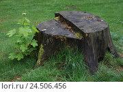 Купить «Meadow, tree stump, instincts,», фото № 24506456, снято 21 июля 2009 г. (c) mauritius images / Фотобанк Лори