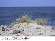 Купить «Germany, Lower Saxony, the North Sea, dune, heaven, blue, North Germany, Cuxhaven, sea, waters, Sand dune, dune grass, stones, width, distance, sea figure...», фото № 24507464, снято 16 июля 2018 г. (c) mauritius images / Фотобанк Лори