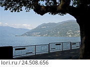 Купить «Italy, Northern Italy, Lago Maggiore, lake, Luino, promenade, mountains,», фото № 24508656, снято 7 января 2010 г. (c) mauritius images / Фотобанк Лори