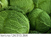Купить «Savoy cabbage, detail, Brassica sabauda, savoy cabbage, cabbage, vegetables, green, healthy, cabbage head head, freshly, rich in vitamins, vegetarian,...», фото № 24513364, снято 18 января 2010 г. (c) mauritius images / Фотобанк Лори