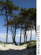 Купить «Windflüchter on the Darss, Germany, the Baltic Sea, west beach, trees, crooked, nature, Baltic island, wind height, askew, Mecklenburg-West Pomerania,...», фото № 24515932, снято 24 февраля 2010 г. (c) mauritius images / Фотобанк Лори