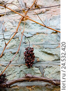 Купить «wall, vine,», фото № 24532420, снято 26 сентября 2018 г. (c) mauritius images / Фотобанк Лори