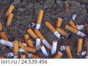 Купить «Ashtray, Sand, cigarette springs, expressed, close up,», фото № 24539456, снято 25 июня 2008 г. (c) mauritius images / Фотобанк Лори