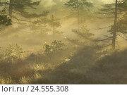 Купить «Black Moore, trees, sunrays, spinning networks, morning mood, Rhön, Lower Franconia, Bavaria, Germany,», фото № 24555308, снято 26 июня 2008 г. (c) mauritius images / Фотобанк Лори