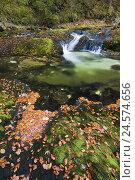 Купить «Forest, brook, leaves, autumn, moss,», фото № 24574656, снято 21 августа 2018 г. (c) mauritius images / Фотобанк Лори