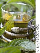 Купить «Peppermint tea at peppermint leaves,», фото № 24575652, снято 23 июля 2018 г. (c) mauritius images / Фотобанк Лори