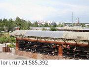 Московский крематорий, стена с прахом людей (2016 год). Редакционное фото, фотограф Дмитрий Неумоин / Фотобанк Лори