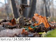 Осень. Опавшие листья на траве. Стоковое фото, фотограф Владимир Иванов / Фотобанк Лори