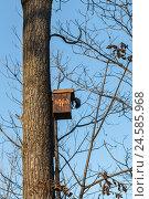 Белка  в домике на дереве. Стоковое фото, фотограф Владимир Иванов / Фотобанк Лори