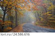 Купить «Дорога в горах в туманный осенний день», фото № 24586616, снято 24 октября 2016 г. (c) Анна Костенко / Фотобанк Лори