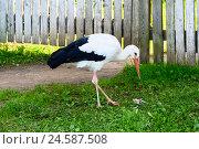 Купить «Белый аист на улице возле забора», эксклюзивное фото № 24587508, снято 19 августа 2016 г. (c) Александр Щепин / Фотобанк Лори