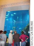 Купить «United Arab Emirates, Dubai, The Palm, hotel Atlantis, aquarium, hotel guests, town, destination, place of interest, tourism, luxury, five-star hotel,...», фото № 24588960, снято 7 января 2009 г. (c) mauritius images / Фотобанк Лори