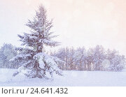 Купить «Winter landscape - snowy fir tree in the winter forest under falling snow in cold evening», фото № 24641432, снято 27 ноября 2010 г. (c) Зезелина Марина / Фотобанк Лори