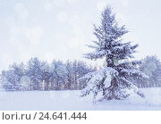 Купить «Winter landscape - snowy fir tree in the winter forest under falling snow in cold winter evening», фото № 24641444, снято 27 ноября 2010 г. (c) Зезелина Марина / Фотобанк Лори