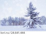 Winter landscape - snowy fir tree in the winter forest under falling snow in cold winter evening, фото № 24641444, снято 27 ноября 2010 г. (c) Зезелина Марина / Фотобанк Лори