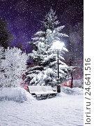 Winter landscape scene of snow covered bench in the night park among frosty winter trees and street shining lanterns, фото № 24641516, снято 19 января 2017 г. (c) Зезелина Марина / Фотобанк Лори