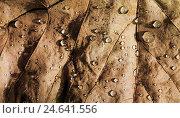 Сухой лист с каплями воды. Стоковое фото, фотограф Mariya Eremenko / Фотобанк Лори