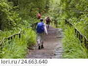 Купить «Traveller at Caldeirao Verde, Queimados, Madeira, Portugal,», фото № 24663640, снято 16 июля 2018 г. (c) mauritius images / Фотобанк Лори