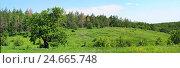 Дуб на опушке леса. Стоковое фото, фотограф Виктор Архипов / Фотобанк Лори