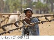 Купить «Myanmar, region of Bagan, cage, work in the fields, plough,», фото № 24669152, снято 20 сентября 2019 г. (c) mauritius images / Фотобанк Лори