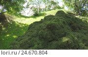 Купить «Pile mown lawn grass», видеоролик № 24670804, снято 14 декабря 2016 г. (c) Потийко Сергей / Фотобанк Лори