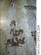 Купить «Tree, inscription, wood, bark, letter, spring, Germany, outside, Europe, trunk, carved, eternity, grey, to cortex, carving, icon, eternity, promise, medium close-up,», фото № 24672224, снято 15 августа 2018 г. (c) mauritius images / Фотобанк Лори