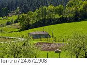 Купить «Fields in the province of Guipuzcoa, the Basque Provinces, Spain,», фото № 24672908, снято 14 августа 2018 г. (c) mauritius images / Фотобанк Лори
