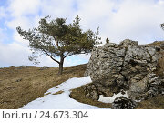 Купить «Germany, Bavaria, Upper Palatinate, untermeadow field, mountain Schanz, snow, mountain, hill, snow leftovers, thaw, plants, nature, outside, botany, flora...», фото № 24673304, снято 21 сентября 2018 г. (c) mauritius images / Фотобанк Лори