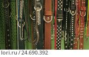 Купить «Dog leashes in a pet tool market», видеоролик № 24690392, снято 19 января 2005 г. (c) Илья Шаматура / Фотобанк Лори