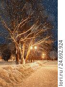 Купить «Winter night park landscape with falling snowflakes», фото № 24692924, снято 17 июля 2019 г. (c) Зезелина Марина / Фотобанк Лори
