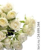 Букет из белых роз на белом фоне. Стоковое фото, фотограф VIACHESLAV KRYLOV / Фотобанк Лори