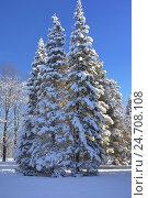 Купить «Ели  под снегом», фото № 24708108, снято 15 декабря 2016 г. (c) александр жарников / Фотобанк Лори