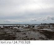 Купить «Берег Белого моря в отлив. Поселок Рабочеостровск близ Кеми. Карелия», фото № 24710928, снято 6 августа 2016 г. (c) Заноза-Ру / Фотобанк Лори