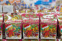 Купить «Новогодние наборы конфет на прилавке в магазине», фото № 24714388, снято 17 декабря 2016 г. (c) Юлия Юриева / Фотобанк Лори