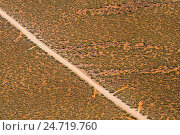 Купить «An unsealed road on Peron Peninsula through arid shrubland on a red sandy plain», фото № 24719760, снято 16 октября 2018 г. (c) age Fotostock / Фотобанк Лори