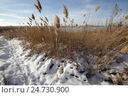 Купить «Волгодонск, Берег сухосоленовского залива», фото № 24730900, снято 17 августа 2019 г. (c) Александр Тихонов / Фотобанк Лори