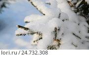 Купить «lot of snow on tree branches», видеоролик № 24732308, снято 16 декабря 2016 г. (c) Володина Ольга / Фотобанк Лори