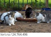 Купить «Кормление уличных кошек», фото № 24764496, снято 24 октября 2016 г. (c) Gaft Eugen / Фотобанк Лори