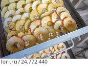 Купить «Яблоки на решетке сушилки», фото № 24772440, снято 28 августа 2016 г. (c) Александр Романов / Фотобанк Лори