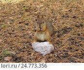 Белка с орешками в пакете. Стоковое фото, фотограф Владислав Чеканин / Фотобанк Лори
