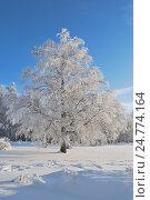 Купить «Заснеженное дерево в солнечный зимний день», фото № 24774164, снято 24 января 2010 г. (c) Татьяна Савватеева / Фотобанк Лори