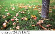 Купить «apples fallen under autumn tree», видеоролик № 24781672, снято 13 октября 2016 г. (c) Syda Productions / Фотобанк Лори